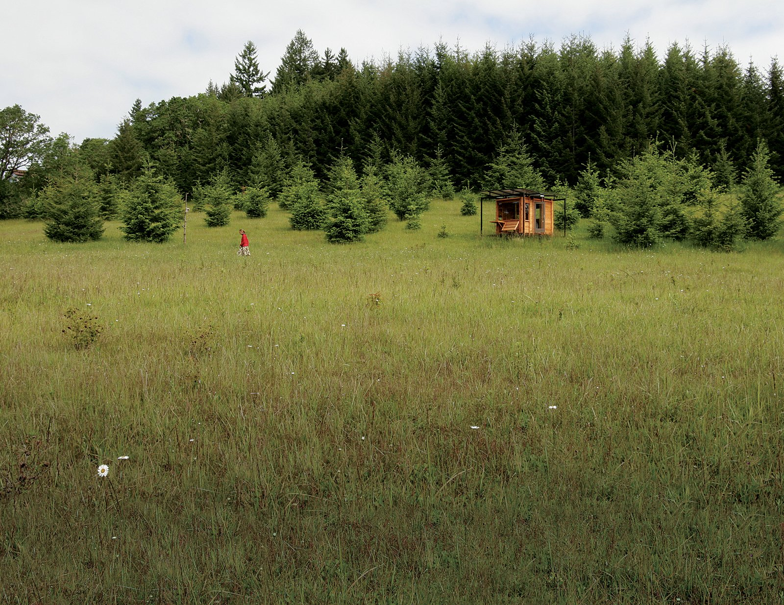 Exterior and Cabin Building Type #outdoor #green #cabin #field #flower #meadow #tree #smallspace #tiny   Cabin from Outdoor