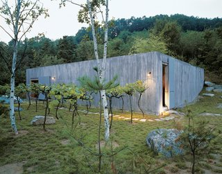 Cho's recently completed vacation retreat, the Concrete Box House, was inspired by the use of raw materials. Cho decided on grape vines as an unusual landscape element.