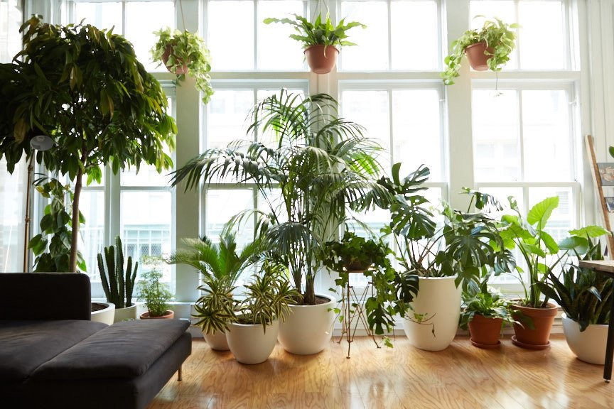 The space opened on the first day of Spring and is filled with an array of plants that include a moss wall, air plant wall, Staghorn Ferns, a variety of potted plants, hanging ceiling plants, and trees.  Office from No Need to Gossip Around the Water Cooler Here