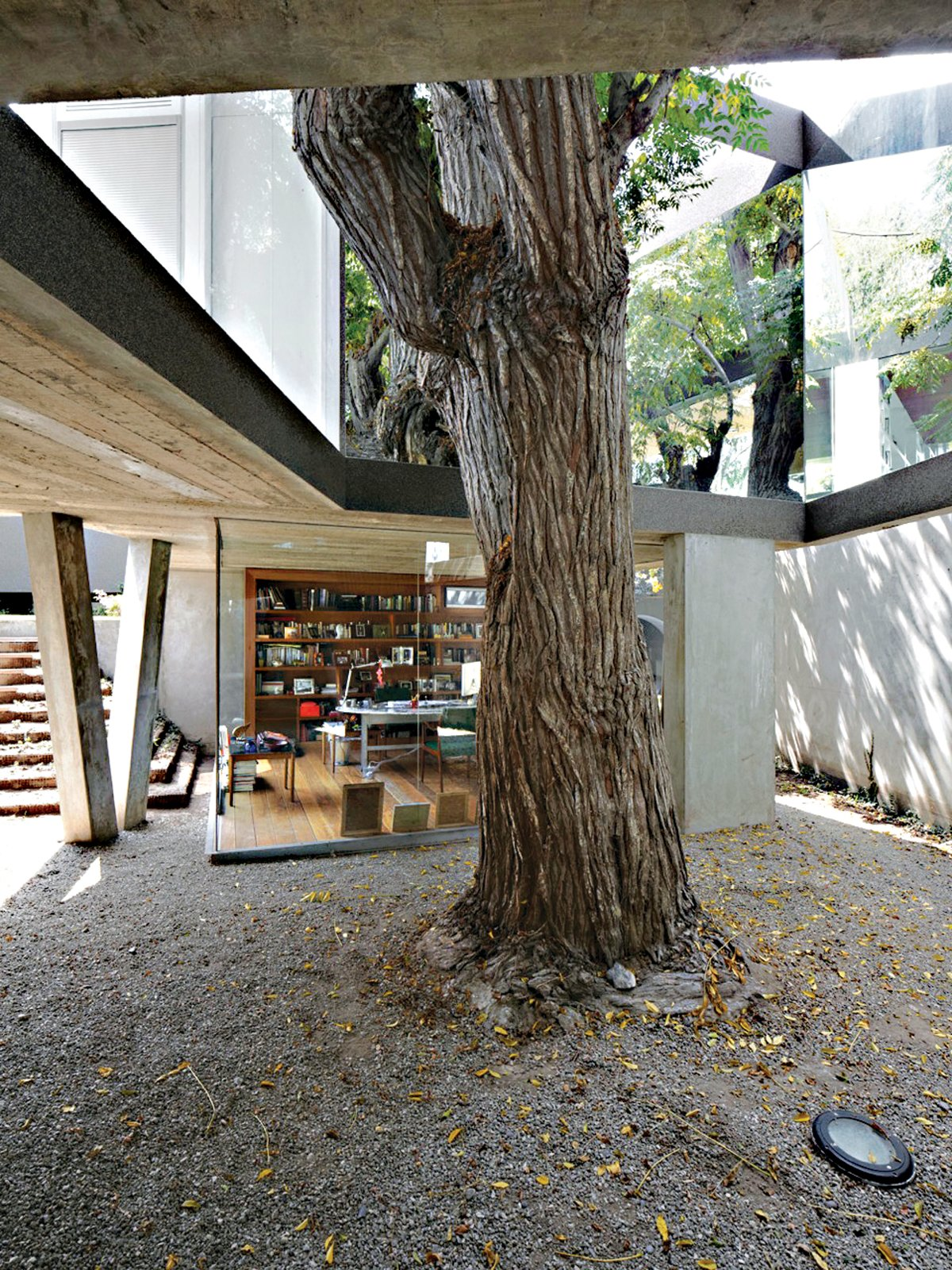 Outdoor, Back Yard, and Trees This open-ended box, lined in mirrored glass, performs like a kaleidoscope, amplifying the mature Melia tree's presence within the dining room.  Photo 9 of 13 in A Modern Concrete Home in Peru