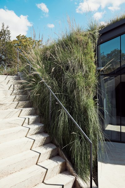 Native grasses spill forth from the green roof toward a stairway leading to the main level.