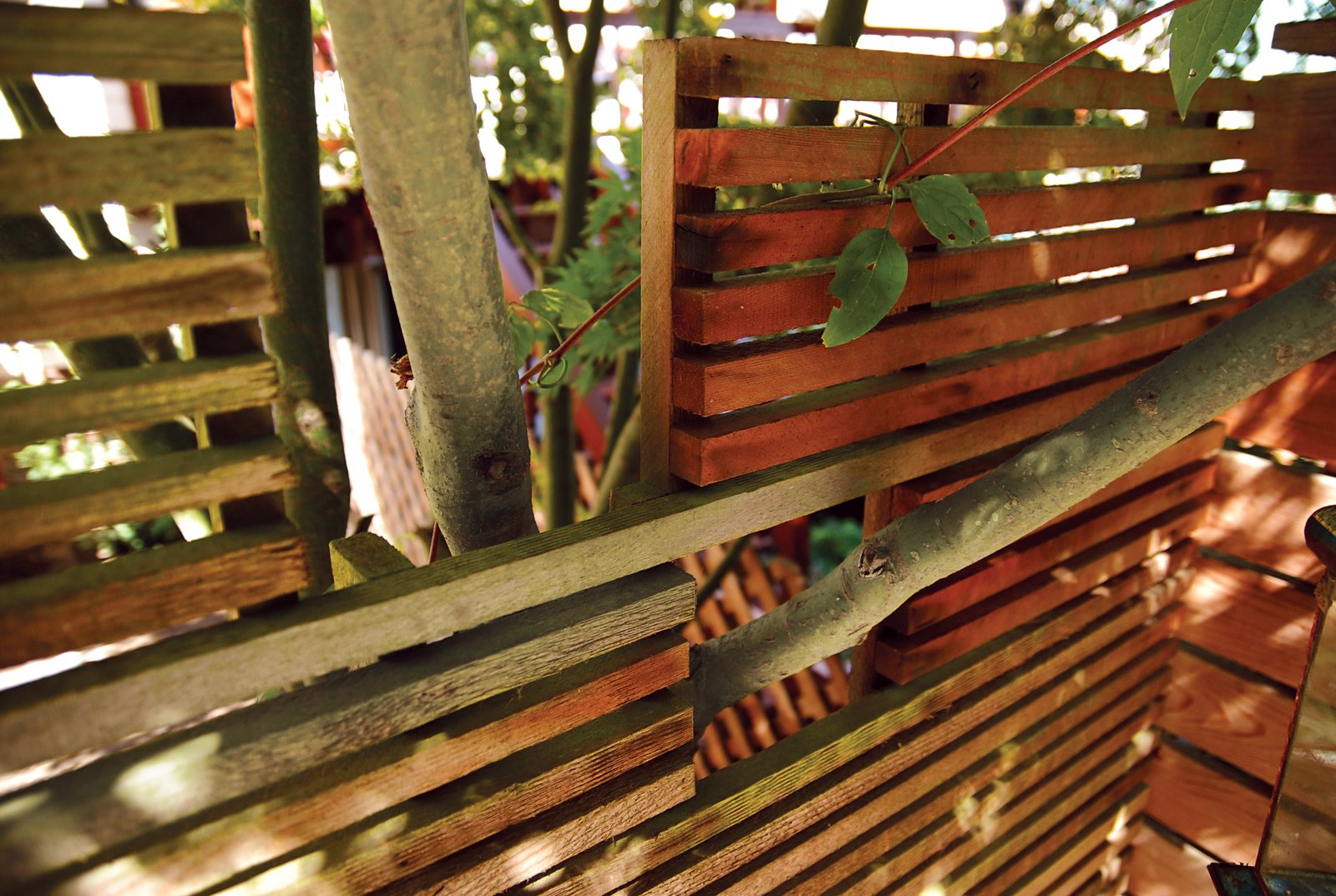 Outdoor, Horizontal Fences, Wall, and Wood Fences, Wall A slatted Western red cedar fence screens a neighbor's yard, adding a measure of privacy while permitting branches from their Japanese maple to cross the property line.  30+ Best Modern Fences by William Lamb from Backyard Marsh in San Francisco
