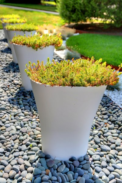 High-gloss pots from Vondom contain drought-tolerant sedum. All told, the landscaping project came in under the $20,000 budget.