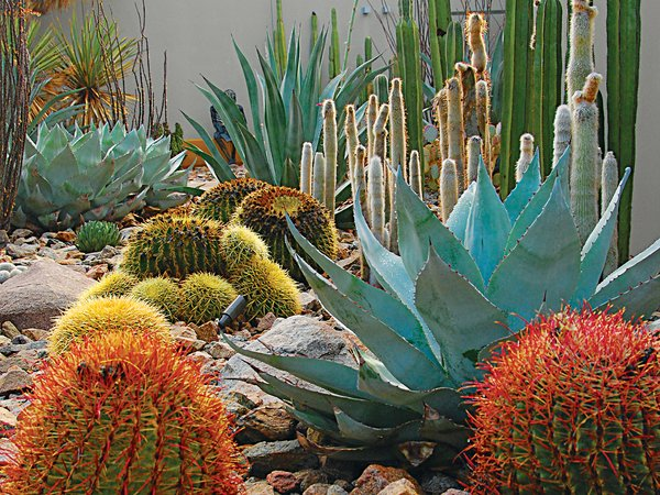 "Southwest: Steve Martino  The red yucca, brittlebush, and prickly pear at a Palm Springs, California, home also relate to the southwestern climate. ""Native plants let your garden tap into the food chain—it becomes a habitat while connecting you to the history of a place."""
