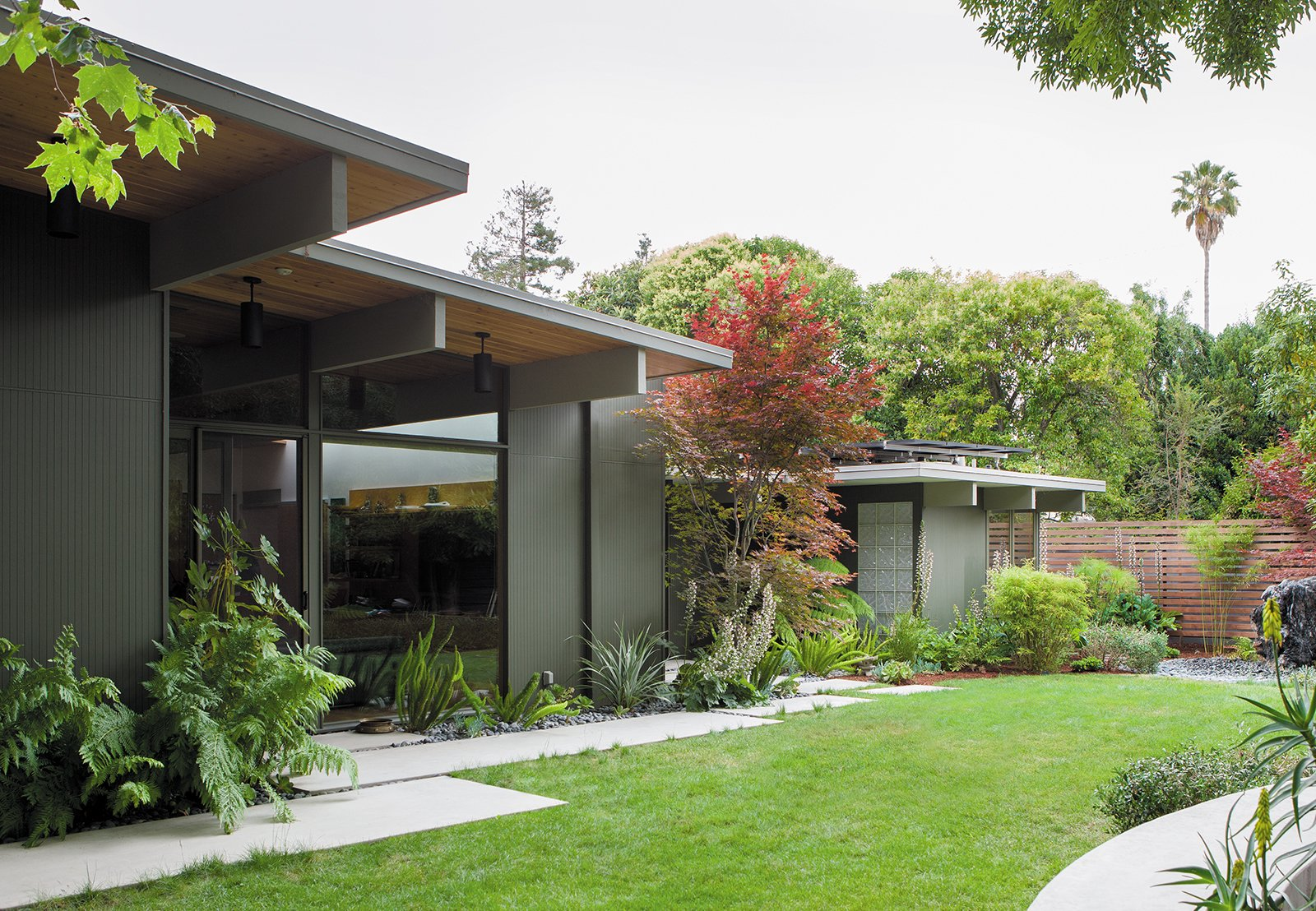 House Building Type, Wood Siding Material, Outdoor, Grass, Walkways, and Concrete Patio, Porch, Deck In the back, ferns and other shade-friendly plants thrive beneath the home's deep overhangs.  Photo 3 of 9 in Creative Landscape Design for a Renovated Eichler in California