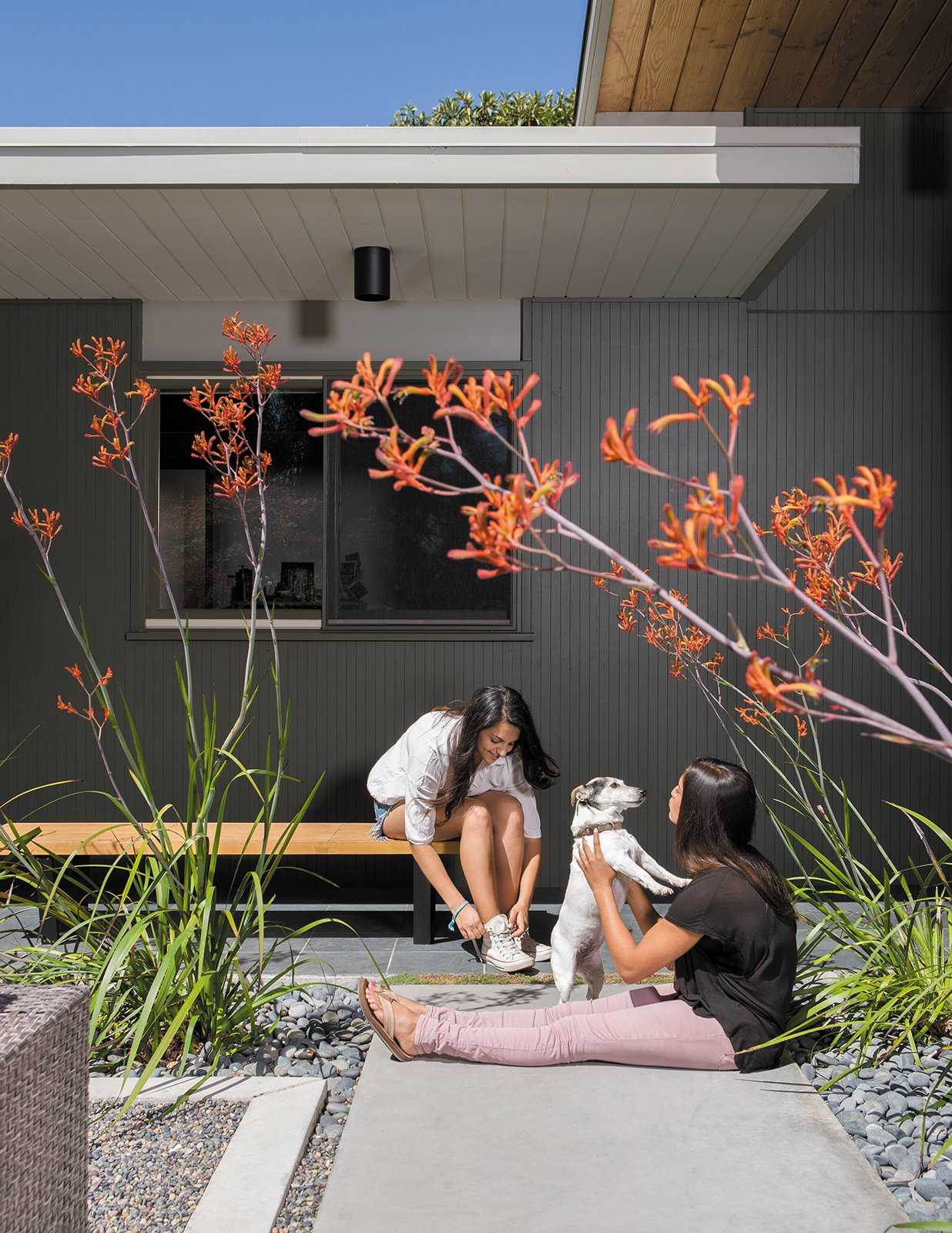 Outdoor, Hardscapes, Walkways, Concrete Patio, Porch, Deck, and Front Yard Their daughters, Annapurna, left, and Siddartha, play with their dog, Anouck, beneath the kangaroo paws in the entry garden courtyard.  Hardscape Design from Creative Landscape Design for a Renovated Eichler in California