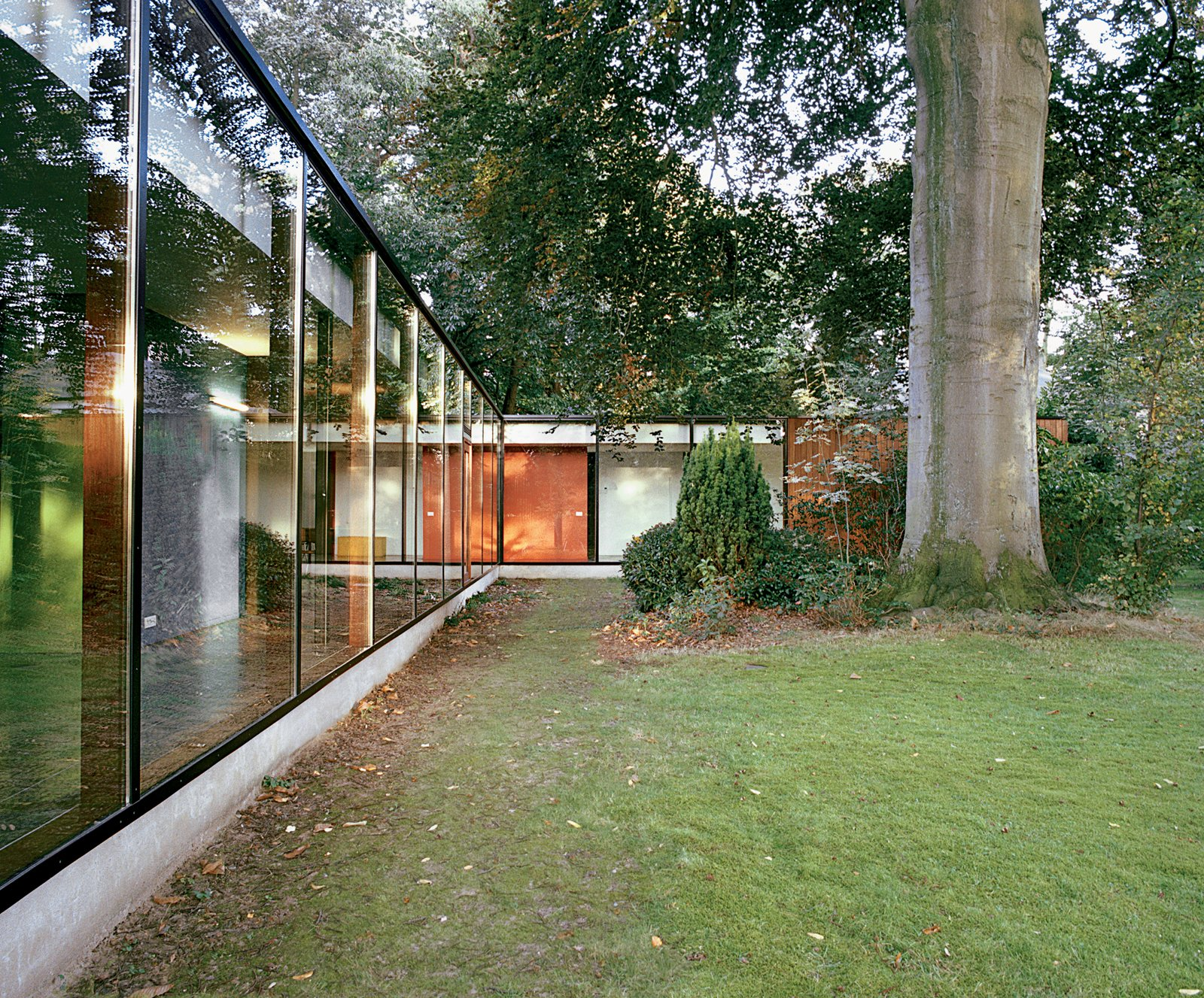 The 300-year-old beech tree supplies shade, movement, sound, and color to the site, and provides a towering natural counterpoint to the renovated home's long, low expanses of glass.  Ways to Incorporate Trees into Homes by Diana Budds from The Tree of Ghent