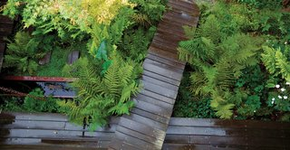A boardwalk made from salvaged wood and steel allows a local stream to flow through this Marin, California, backyard.