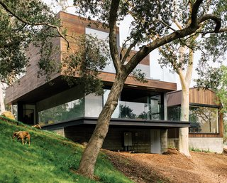 He worked around existing oak and eucalyptus trees for the new building, and retained the vernacular of an original barn, at right, where Frankel hosts concerts. Check out MVRDV's Balancing Barn.