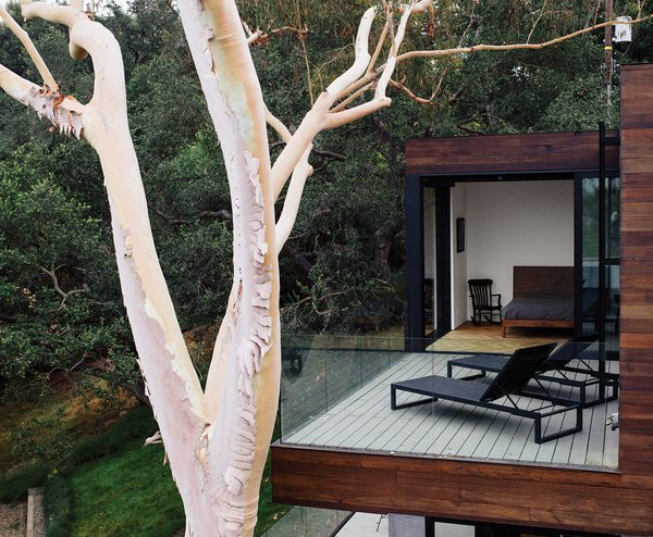 """The terrace off a bedroom holds chaise longues from Design Within Reach. """"When we laid out the project, the eucalyptus tree was going to go away,"""" says Walker. """"But then we thought, if we move the foundation a little bit, we can probably save the tree."""""""