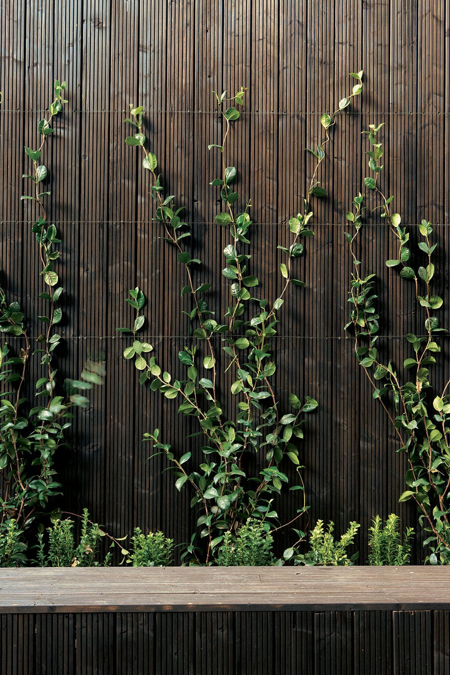 Outdoor, Vertical Fences, Wall, and Wood Fences, Wall A garden of of small herbs and vines creates a fan of green as the plants creep up the outside walls. What at first seems to be a stark use of artificially dark wood reveals itself to be unironically natural: a soothing and woodsy backdrop for this home in the bustling city.  Photo 5 of 13 in All Clad