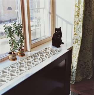 13 Houseplants That Are Safe for Cats and Dogs
