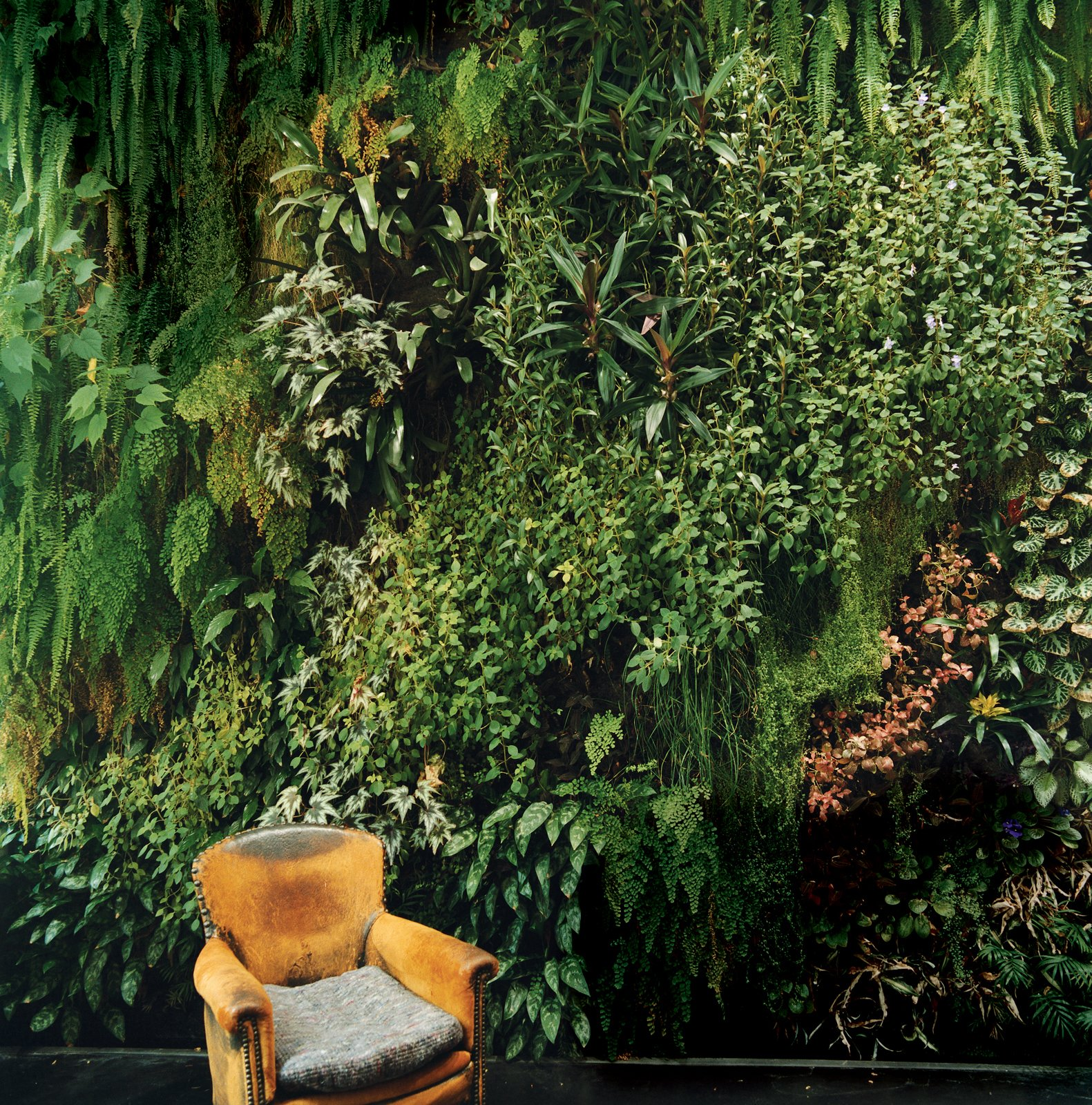 The indoor garden wall Patrick Blanc created for his friends the Dimanches is so lush, it's almost as if someone has plopped an easy chair down in the middle of a forest.  Lush Life from Garden Apartment