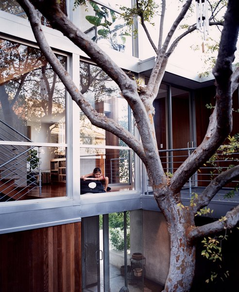 Outdoor and Trees Kalia, just outside the playroom, overlooking the courtyard and the Chinese elm around which the entire interior was built.  Photo 12 of 13 in Two Houses Are Better Than One