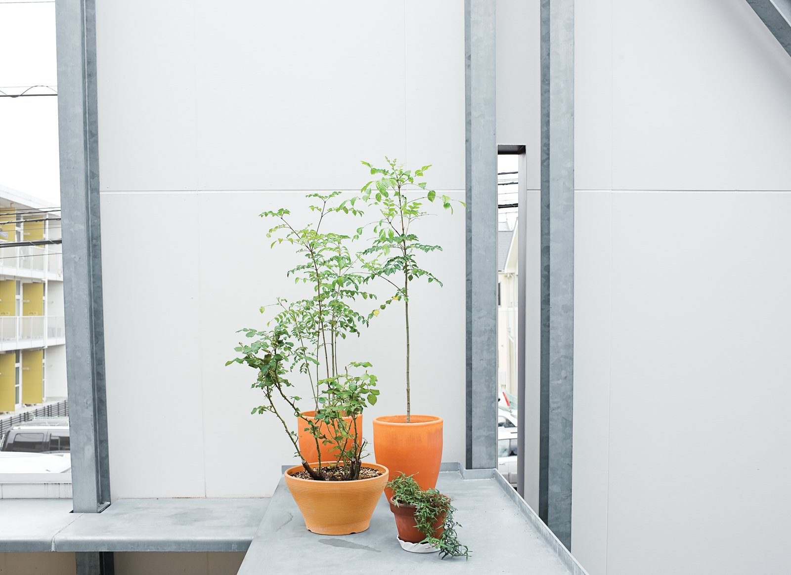 """Outdoor, Small Patio, Porch, Deck, and Concrete Patio, Porch, Deck Plants thrive on the sheltered terrace.  Search """"terrace"""" from Small Box Home With Black Metal Facade in Japan"""