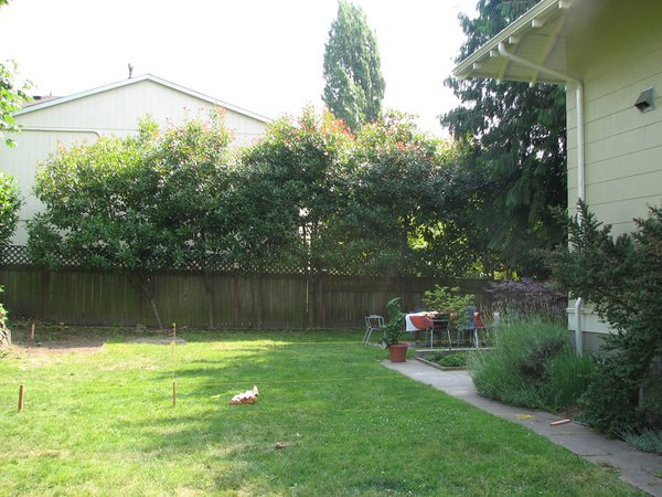 A view of the yard from the front door, before the addition.