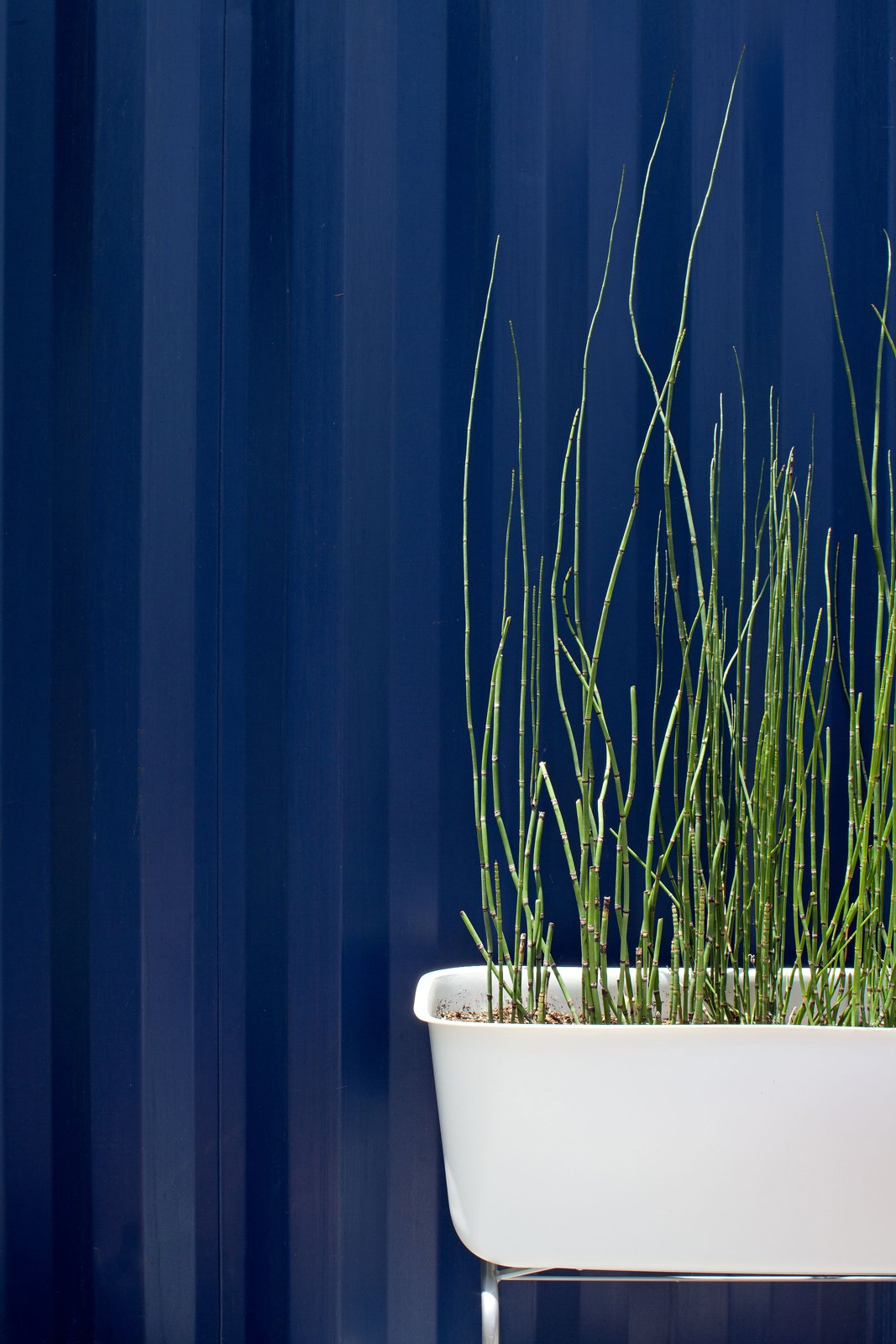 """Reeds grow from a tub outside the steel structure. """"We capture the graywater from the sink and shower, and use it to water the plants in the garden,"""" says Hill.  Photo 8 of 17 in Smaller in Texas"""