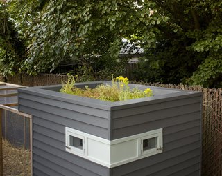 """Snyder finished the sleek-looking box with reclaimed cedar siding and ventilated it with two upper windows. On top, he added a green roof: """"The living roof helps keep the coop cool, but mostly it was a chance to experiment and design something fun."""""""