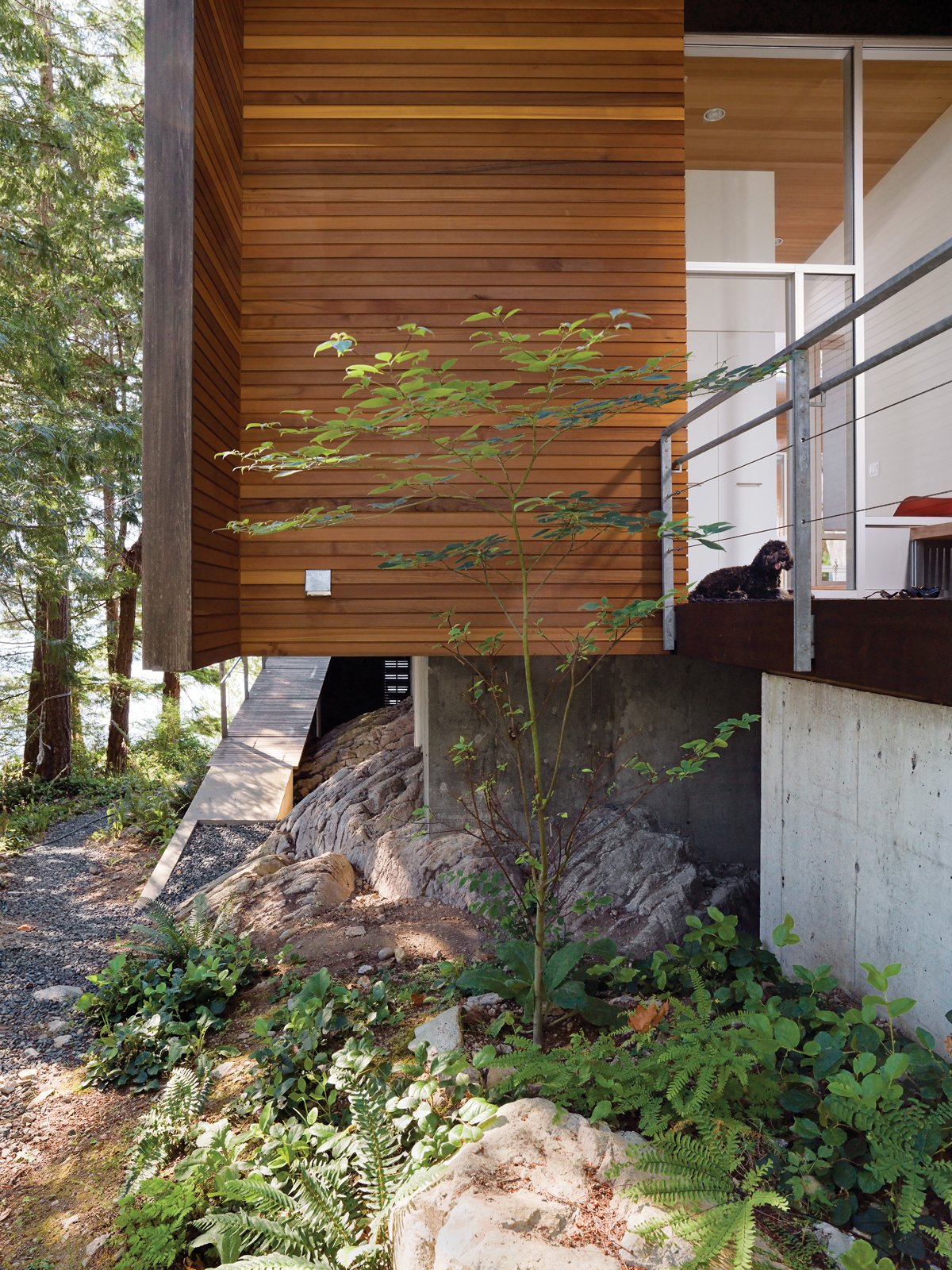 "Outdoor, Walkways, Boulders, Trees, Shrubs, and Side Yard The cantilevered main floor creates space for bracken fern and other indigenous vegetation to flourish.  Search ""5 gravity defying cantilevers"" from When Living on the Edge is Super Comfortable"