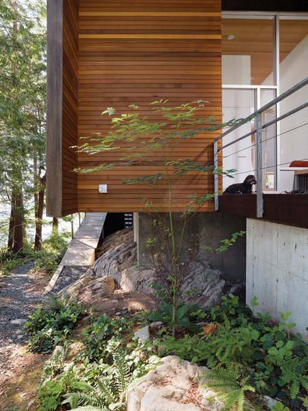 The cantilevered main floor creates space for bracken fern and other indigenous vegetation to flourish.