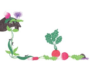 An Introduction to Home Gardening