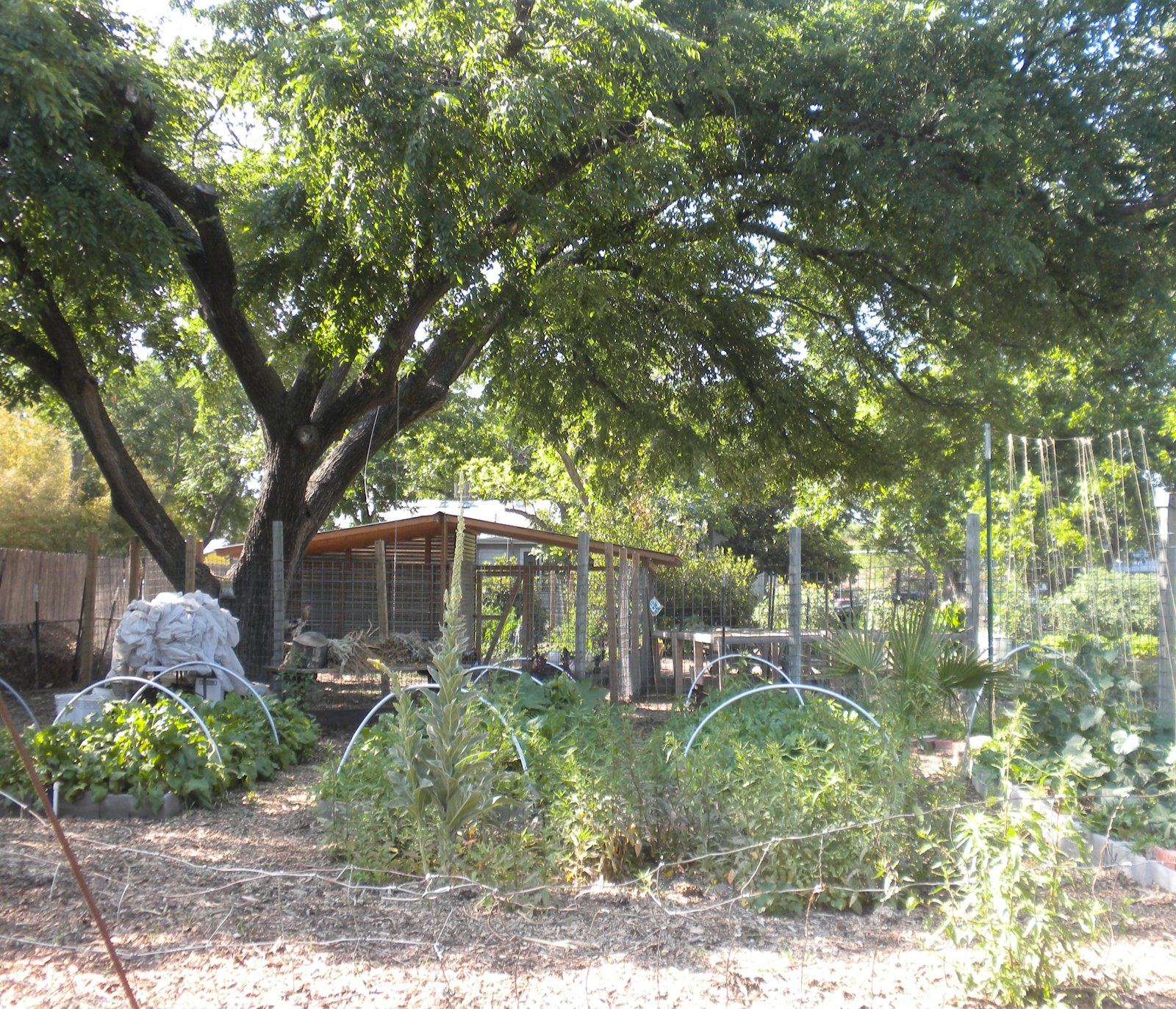 We had hoped to go to the Eastside Cafe but Mother's Day made for hour-plus waits. We were, however, able to walk around the gardens, from which the restaurant sources much of its produce.  Three Days in Austin, Texas by Miyoko Ohtake
