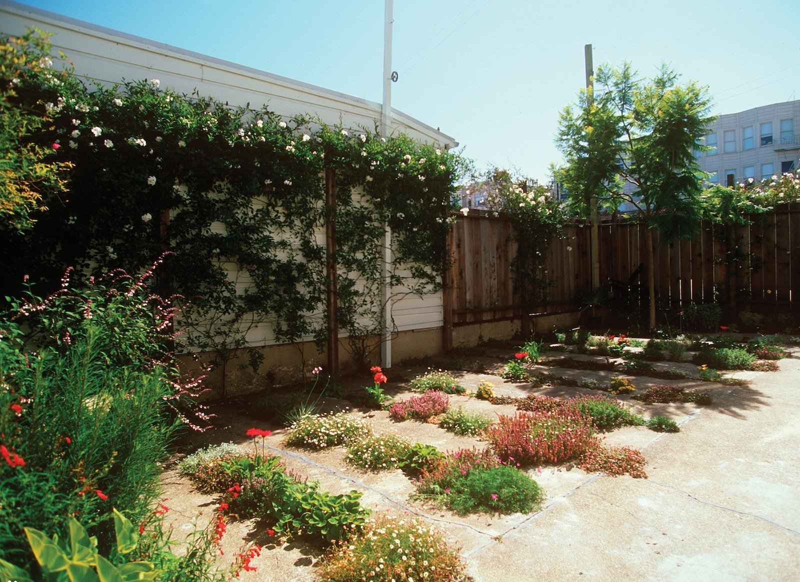 And here's the finished product. In 2009, the project garnered an Honor award from the ASLA in the Residential Design category. The 800-square foot garden cost just $500 to create.  Photo 6 of 13 in CMG Landscape Architecture