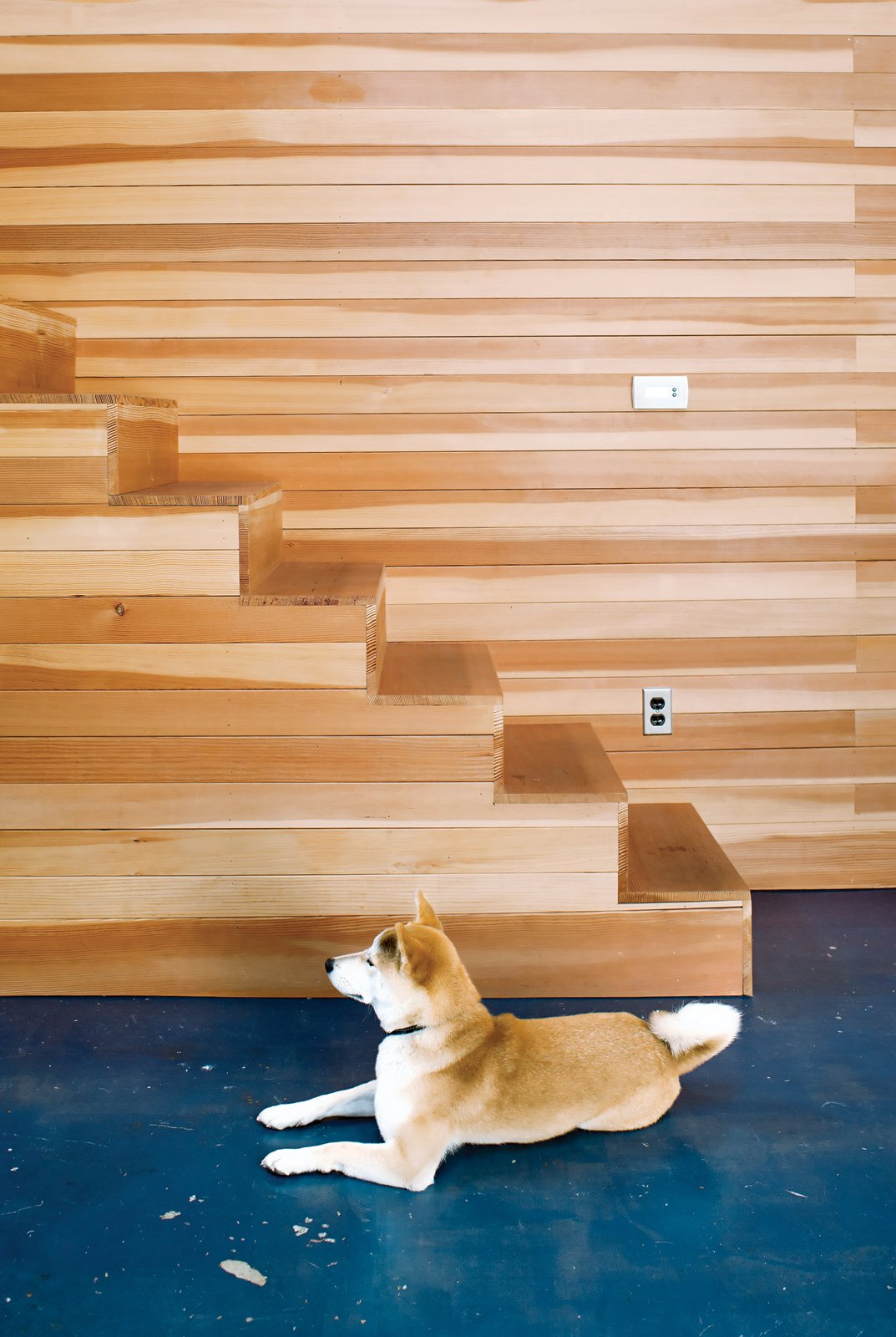 Staircase and Wood Tread Ando, a Shiba Inu, was in the first Puppy Cam litter.  Photo 1 of 25 in Leap Into the Year of the Dog With These 25 Pups in the Modern World from Storage Savvy Renovation in Emeryville