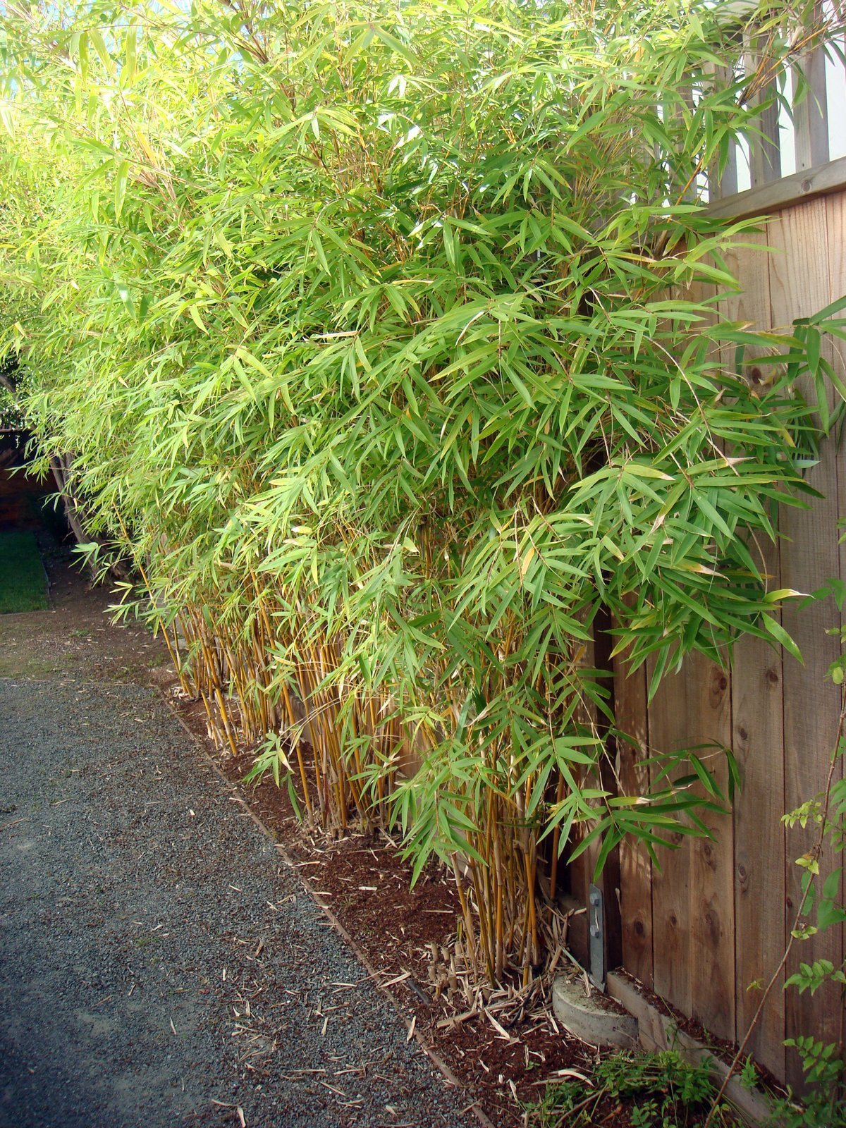 A living screen of bamboo provides additional privacy between neighbors. Landscape design measures like using native plants, avoiding invasive species, and opting for varieties that require no shearing garner points.  Building Green in Albany by Diana Budds