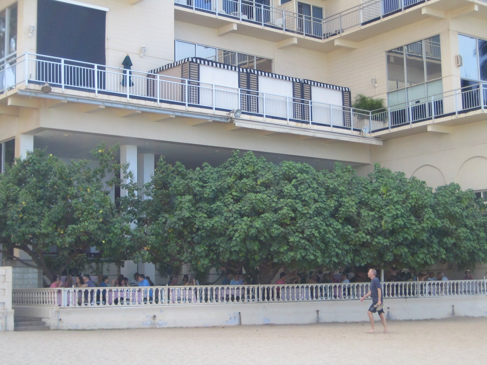 Considering how lovely the view was from the restaurant, I was surprised at how wholly the tree covers the place when viewed from the beach.  Photo 3 of 5 in Hau Tree Lanai in Honolulu
