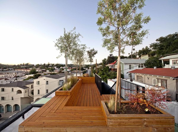 """Planted with three olive trees and drought-resistant shrubs, the roof terrace provides an entertaining space, where Storey often has friends over for drinks and dinner. Storey made the deck out of clear-coated Douglas fir to save costs; it also echoes the cabinets inside, providing visual continuity. """"[I wanted] to keep the variety of wood species you use to a minimum,"""" says Storey."""