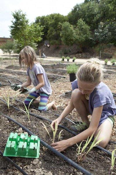 Ingrid and Jane get to work planting seedlings.