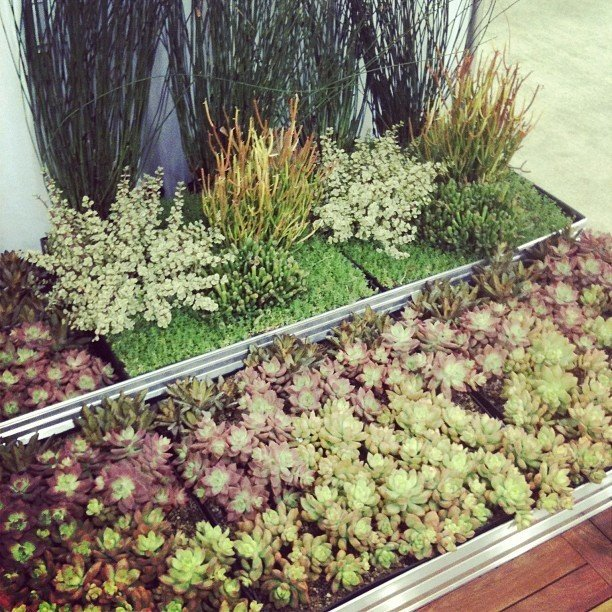 GreenGrid's modular green roof system stood out among the other companies offering similar products.  Highlights from Greenbuild 2012 by Diana Budds