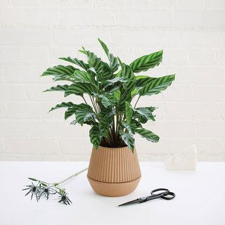 This Pleated Planter is sized to hold one plant and includes a self-watering wick to ensure that the plant does not need to be watered as frequently as typical earthenware planters. The earthy color of the planter makes it a neutral accent that will complement a dining room table, side table, or even the corner of a room.
