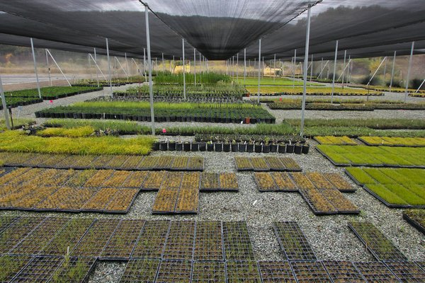 Rana Creek Nursery by David Bryan.