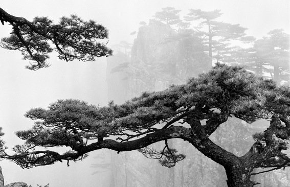 Heart Dragon Pines Overlooking the Peak taken at Now-I-Believe-It Peak in 1975  Photo 1 of 9 in Celestial Seasons