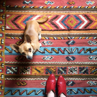 """New rug from Morocco, Iggy approves."""