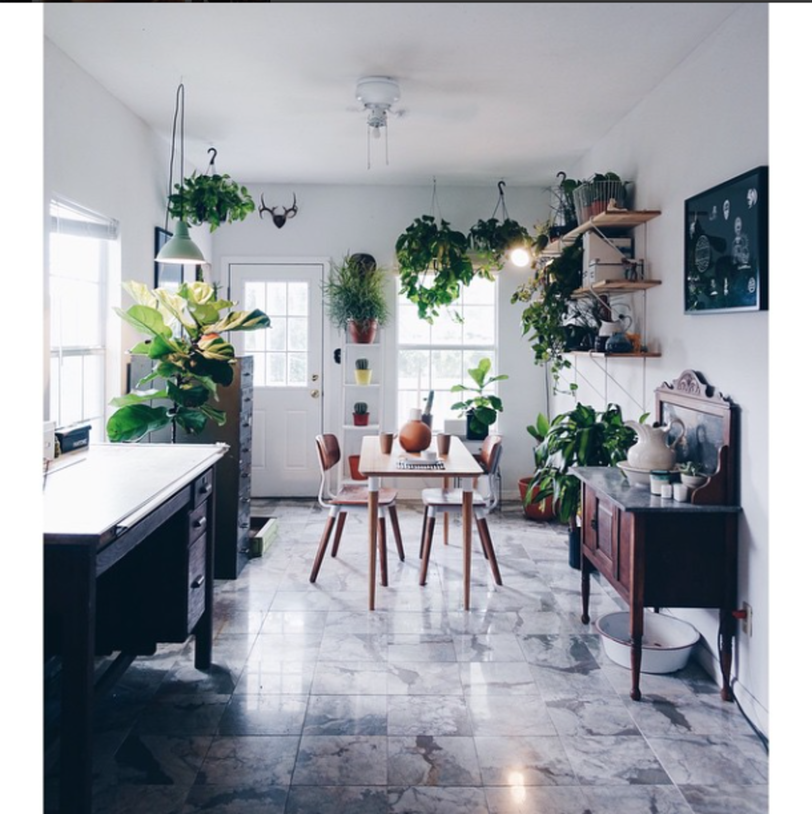 """And the tour of Austin, TX begins at the cutest frickin house ever.""  Photo 1 of 1 in Photo of the Week: Plant-Filled Austin Dining Room"
