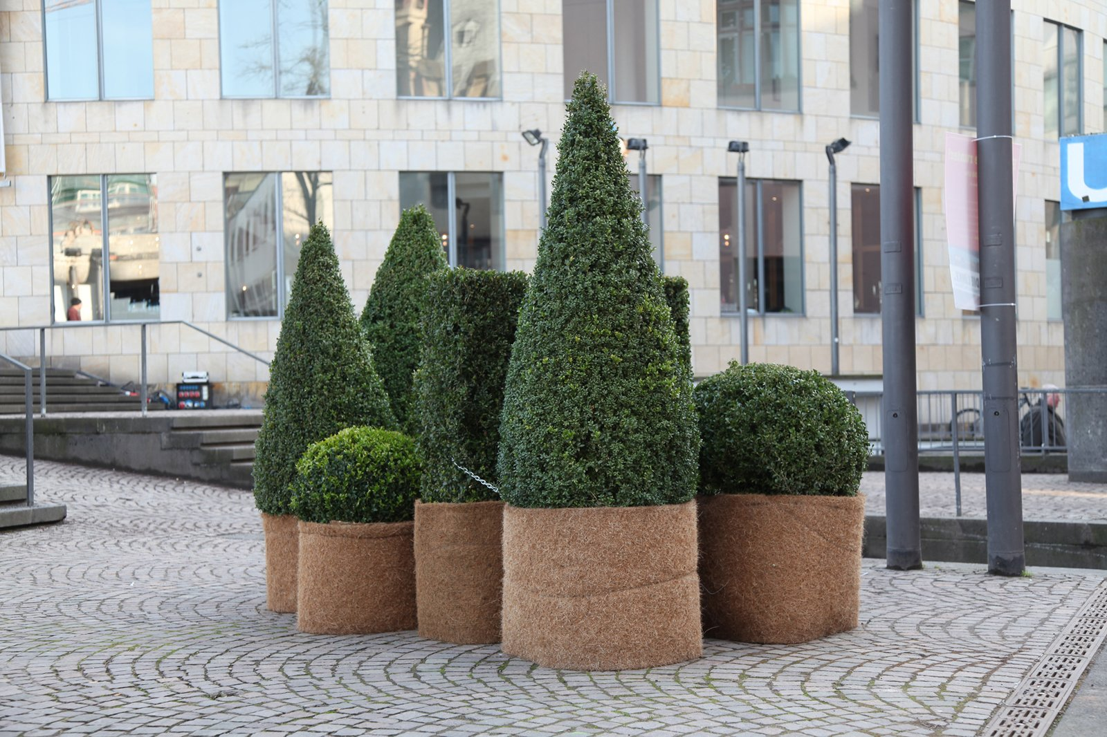 Maria Loboda's installation at Frieze will utilize topiary as seen in an earlier work,The bad boys of Harvard, 2011. Topiary. Photo courtesy of the artist and Schleicher/Lange.  Photo 5 of 6 in Frieze Art Fair: 7 Things Not to Be Missed