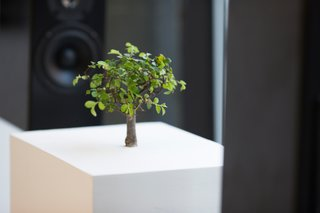 Martin Roth explored the effect of noise on plant life via the bonsai seen here and an arrangement of sound from wildlife in a network of aquariums. Martin Roth, Untitled (Bonsai), 2013. Courtesy of the artist and The Red Bull Music Academy.