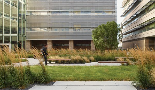 Landscaping served myriad functions at the UCSF Smith Cardiovascular Research Building: to reduce stormwater runoff, buffer winds, create urban wildlife habitat, and foster conections between the city and campus.