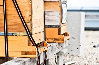 The hotel harvests bees on the roof and makes use of the honey in its bakery.