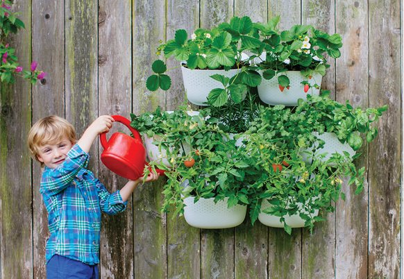 """The new Living Wall Planter 2 can be watered once in as long as two weeks' time, during which it """"self waters"""" via a vessel in the back."""