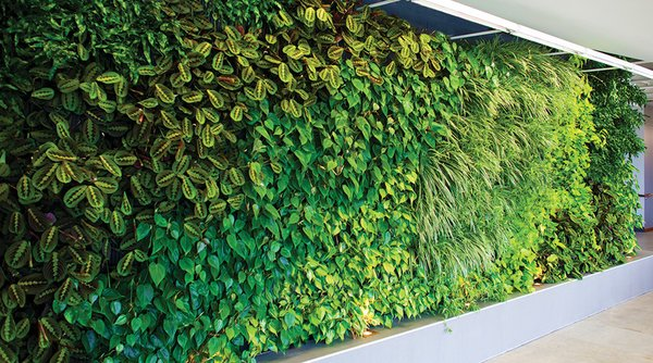 A Woolly Pocket wall installed by a professional designer groups together a variety of plantings.