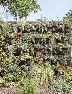 A variety of drought-tolerant plants cascade down a 10-foot-wide vertical garden wall near the entrance to the property.