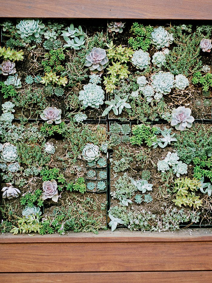 In one area, he built a vertical wall of succulents.  Photo 2 of 3 in How to Make Your Garden Water-Free