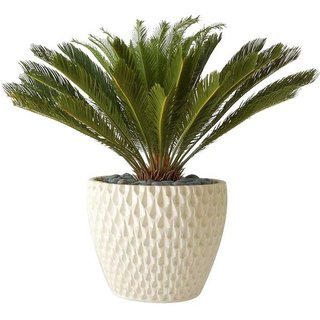 Designed by David Cressey for Architectural Pottery, the Pineapple Planter adds a touch of the tropics to a household plant, even in the least tropical climates. With an intricate textured honeycomb exterior, the planter gives a nod to a pineapple's exterior, while still maintaining an artful, modern look. The AP-100 Pineapple Planter is perfect for housing a large fern or leafy plant.