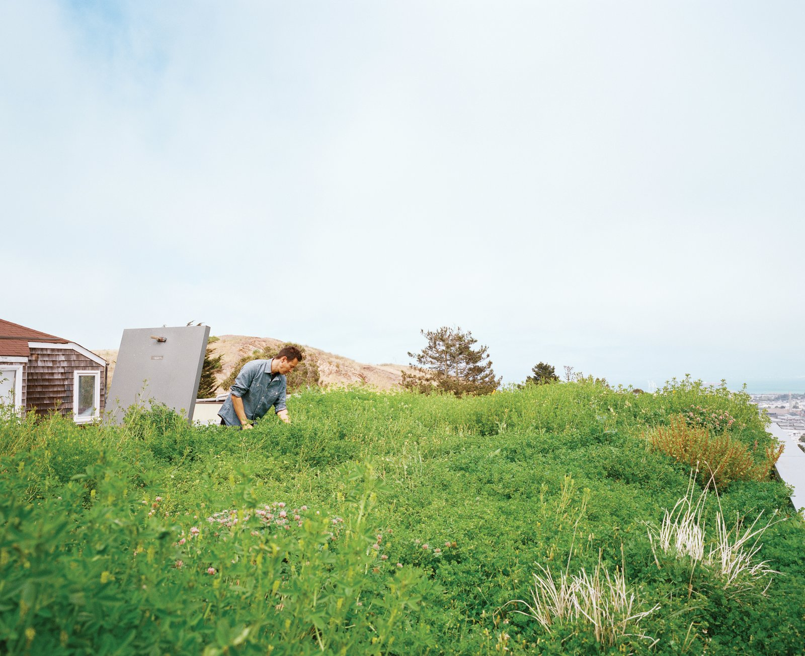 Exterior and Green Roof Material For his family's recently remodeled home in San Francisco, designer Peter Liang undertook a two-part landscaping renovation: He planted a living roof, then, with the help of landscape architect Andrea Cochran, redid the backyard.  Photo 2 of 6 in A Two-Part Landscaping Renovation in San Francisco