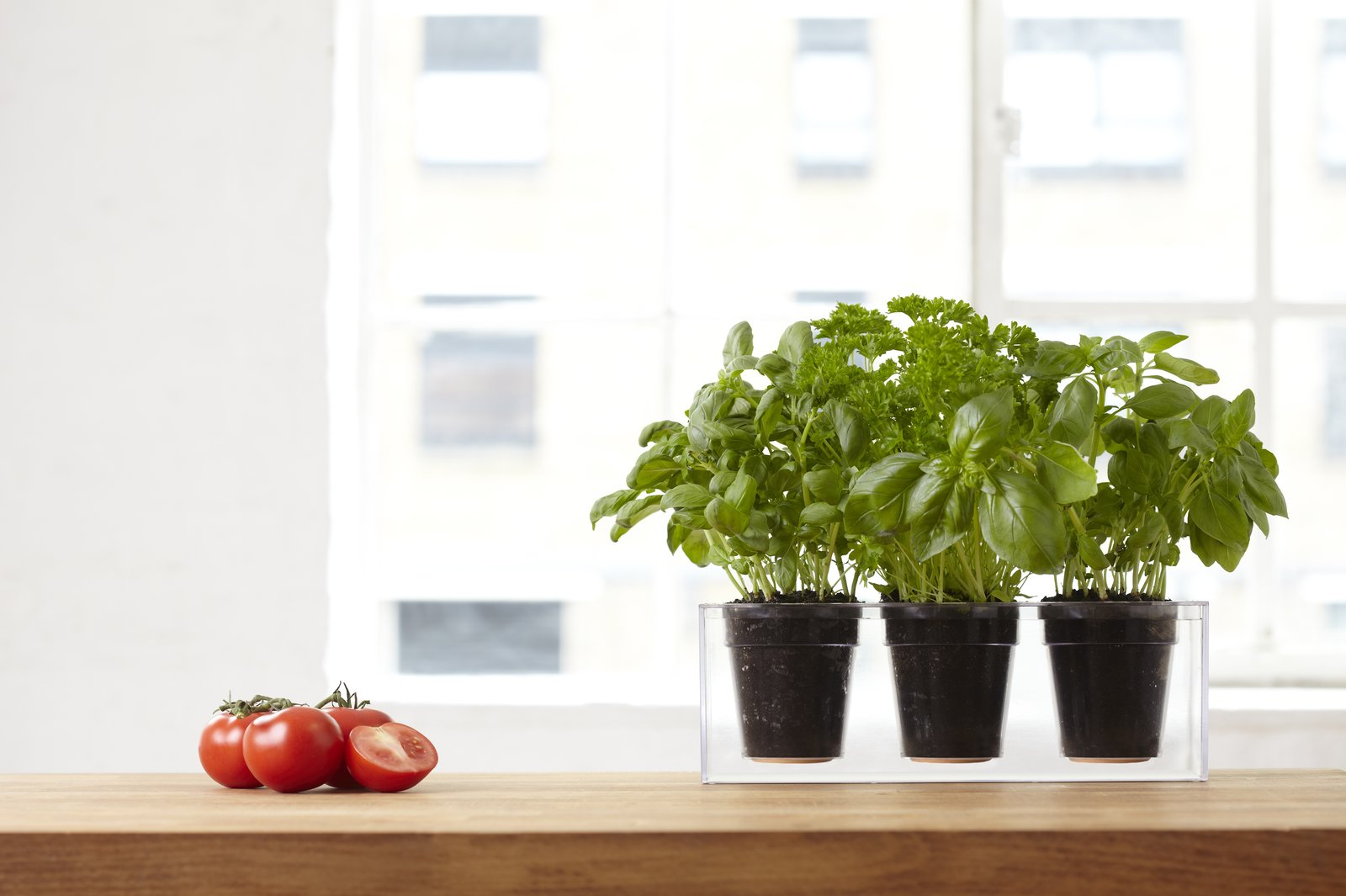 The Bosske cubes can be used to house flowers, giving a pop of color to an apartment, or a variety of other plants. The trio planter makes for a great herb garden on a kitchen windowsill or counter.    Photo 3 of 6 in 5 Simple Tips For Growing an Indoor Herb Garden from Easy Urban Gardening with Bosske Planters