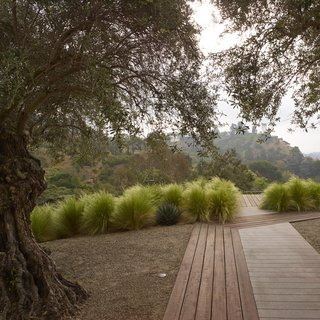 "Leading from the communal pool area to the more intimate olive tree grove, the intricate ""woven"" ipe boardwalk plays with a variety of lineweights and patterns. All of the wood used for the project is reclaimed."